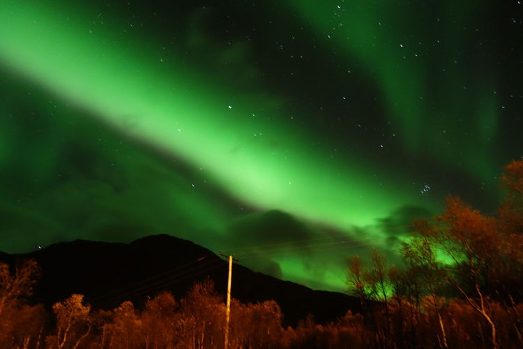 Low angle view of sky with aurora borealis at night