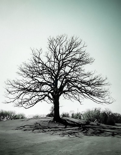 Background Backgrounds Bare Tree Bare Trees Black & White Black And White Bradley Olson Bradleywarren Photography Branch Bridge Distance Distant Graphic Graphic Design Hi Hi! Landscape Silhouette Sky Text Tranquil Scene Tranquility Traveling Tree Trees