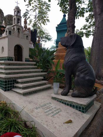 amigo leal, esperando el regreso..... #cementeri #cemetery #dog #friends #graveyard #mexico #mexico #beach City Nature Outdoors Travel Destinations