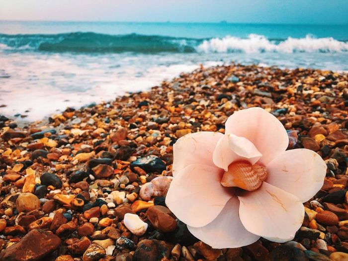 Hidden treasure Seashell Flower EyeEm Nature Lover EyeEm Nature Lover EyeEmNewHere EyeEm Best Shots Sea Beach Land Beauty In Nature Water Nature Rock Wave Close-up Scenics - Nature Power In Nature Tranquility Summer Exploratorium A New Beginning
