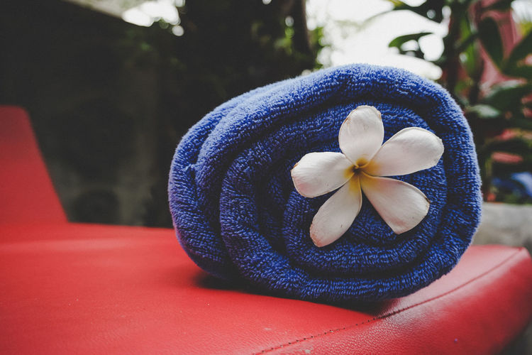 Close-up of flower in blue towel on table