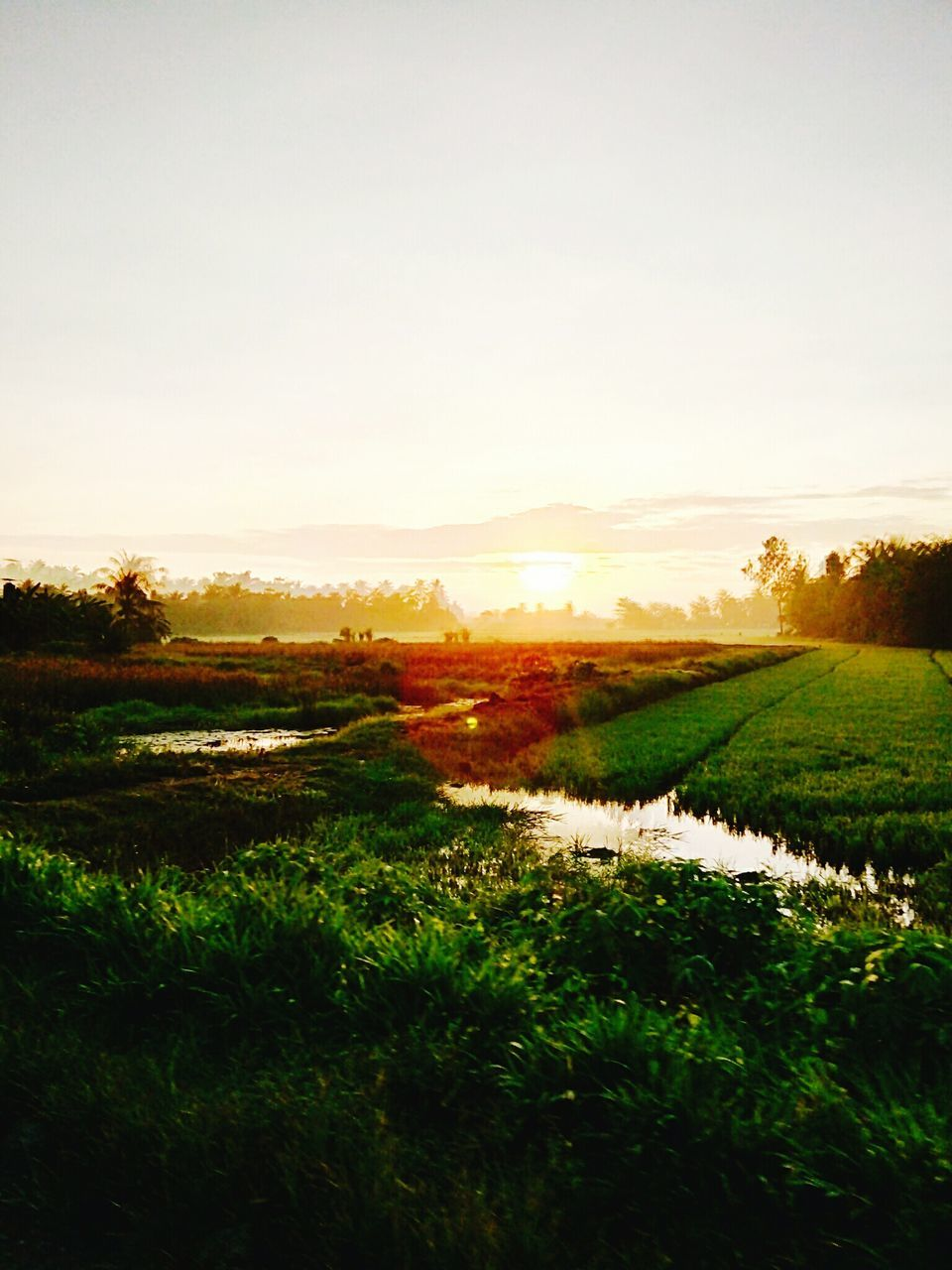 tranquil scene, tranquility, field, grass, nature, scenics, beauty in nature, landscape, rural scene, sunset, agriculture, no people, outdoors, growth, green color, tree, sky, day, water, rice paddy