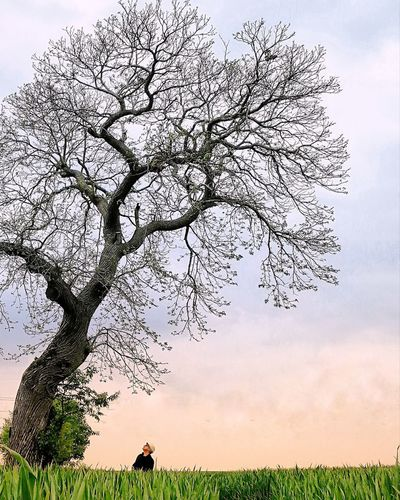 View of tree on field against sky