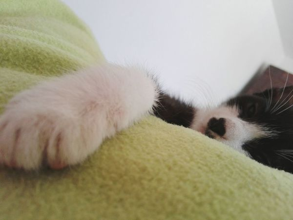 Domestic Animals Pets Close-up One Animal No People Indoors  Animal Themes Edited By @wolfzuachis Huaweiphotography Eyeem Market Showcase: January @WOLFZUACHiV Veronicaionita Showcase: 2017 Wolfzuachiv On Market Romania Originalcontent Cat Kitty Cat Laying On Bed Cat Paw Paw Looking At Camera EyeEmNewHere