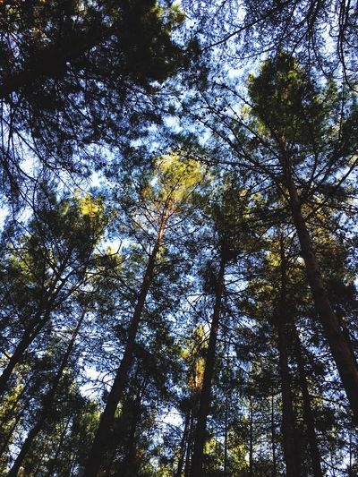 Forest Nature Tall Beauty In Nature Sky Outdoors Green Tree Trunk Fotoseym First Eyeem Photo