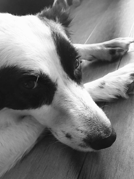 Beauty Blackandwhite Filter Iphone7 Iphone7photo IPhoneography Iphonephotography Mylove