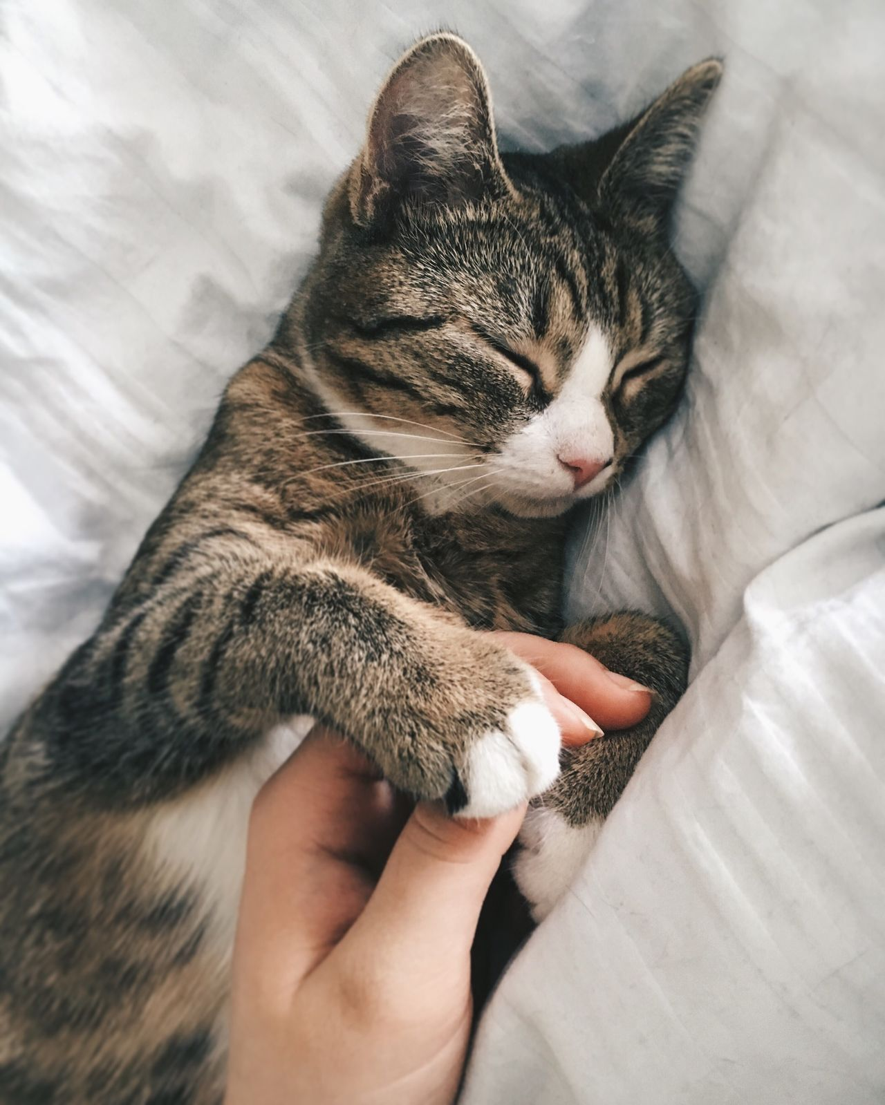 Cropped hand touching sleeping cat on bed at home