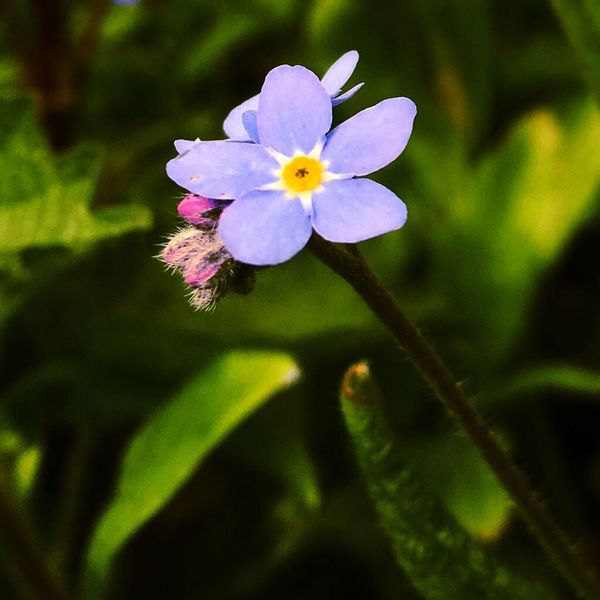 Forget me not Delftse Hout Eye4photography  EyeEmBestPics EyeEm Best Shots