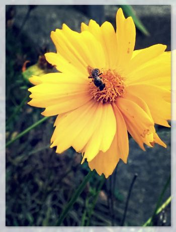 Hanging Out Taking Photos Check This Out Hello World Bees And Flowers Close Up Nature Close Up Photography My Favorite Photo Pixlr Edit Blurred Background This Week On Eyeem This Week On Eyeem Eyeem Best Shots