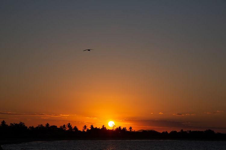 Silhouette birds flying over lake against sky during sunset