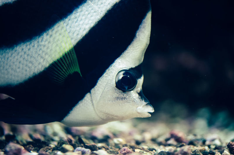aquarium macro photography Aquarium aquarium fish ocean beautiful amazing blue [ a:12457861] bigfish Blue coralreefs exotic fish fishtank greyshark Moray Moray eel [ a:12457864] Nature ocean oceanfish reef shark StockPhotography wallpaper sky