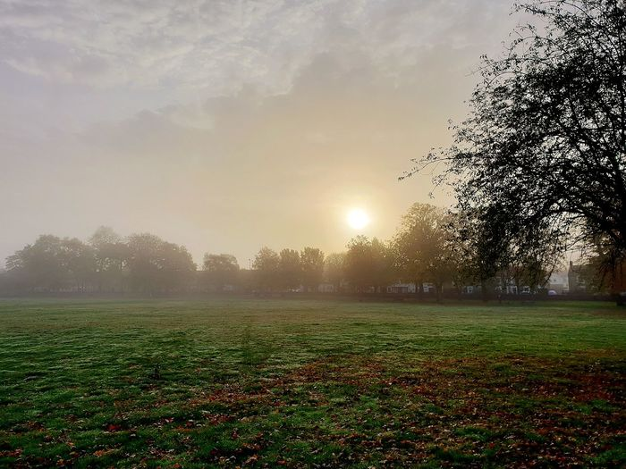 Misty My Best Travel Photo EyeEm Selects October Overcast Weather ❤ Outside Photography Misty Morning Swindon Victorian Park Flower Agriculture Field Tree Sky Grass Dew Autumn Mood