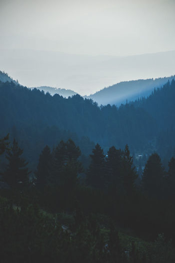 Fade away Wanderlust Beauty In Nature Day Fog Forest Growth Landscape Lopatar Mountain Nature No People Outdoors Pine Tree Scenics Sky Tranquil Scene Tranquility Tree