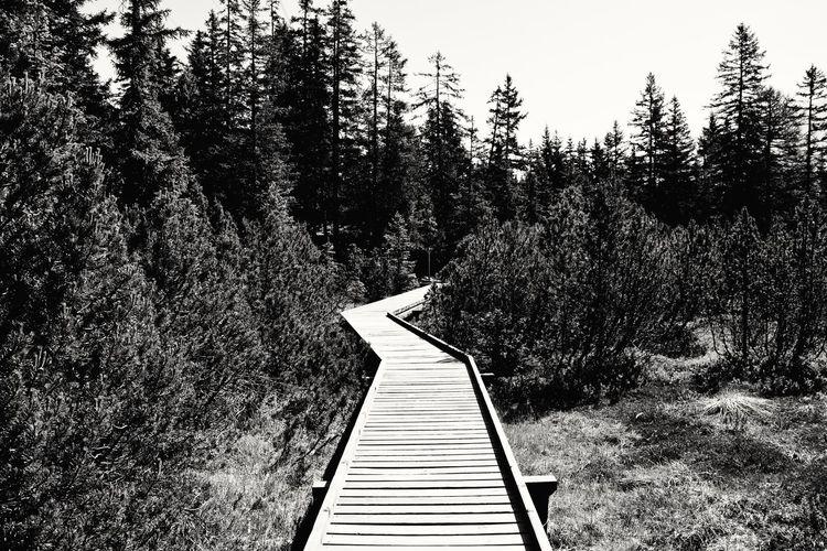 Boardwalk in forest against sky