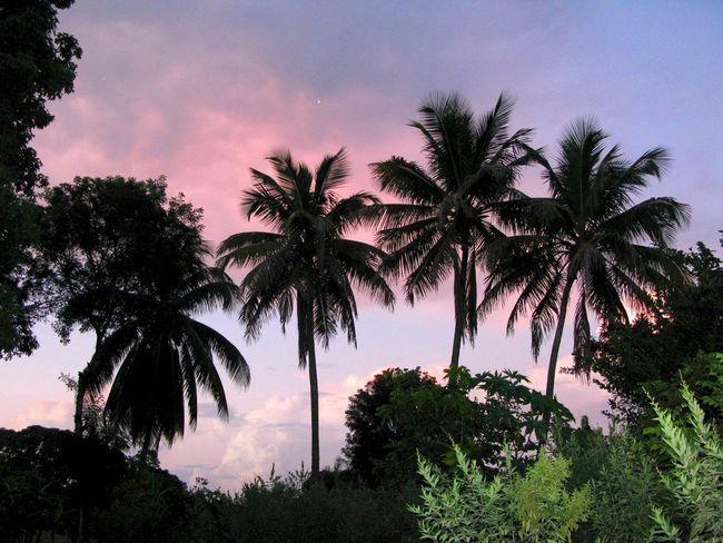 Haitian Sunset DeLeonStrong Optoutside
