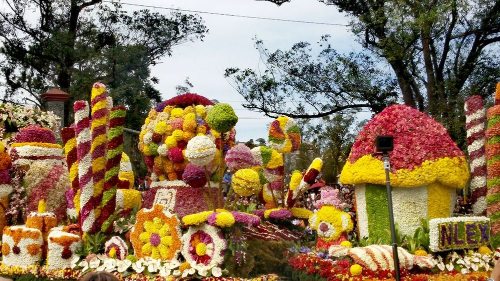 Philippines Baguio Panagbenga PanagbengaFestival Flower Festival Colors Parade Parade Float Float Flowers Nlex Trees No People Tree Nature Beauty In Nature Freshness Multi Colored