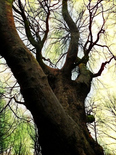 trees#forrest#sk