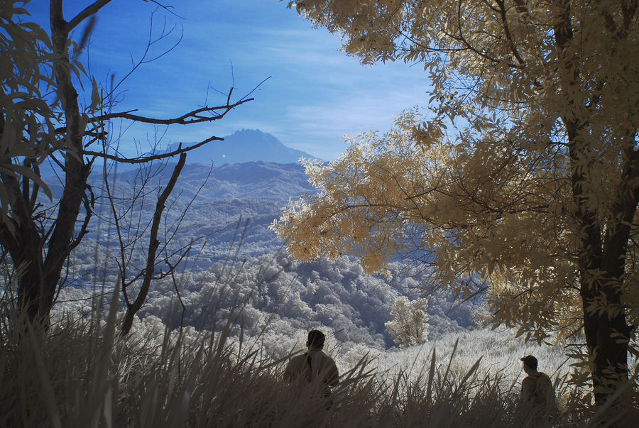 An infrared view of a mountain and valley with shadows of two men. Tranquil scene with white grass and yellow foliage. Branches Infrared White Grass Beauty In Nature Color Infrared Day Infrared Photography Landscape Mountain Mountain Range Nature Outdoors Real People Scenics Shadow Sky Standing Tranquil Scene Tree Two People Valley Yellow Foliage Yellow Food