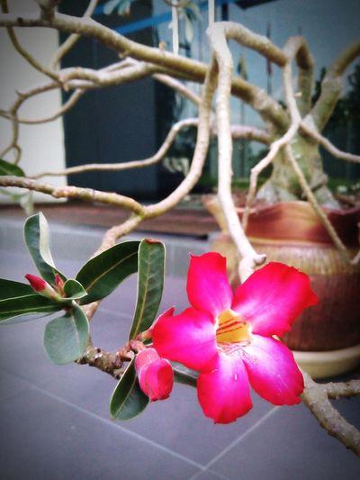 EyeEm Nature Lover EyeEm Flower Flower Tanjung Malim Flowers,Plants & Garden Flower Garden