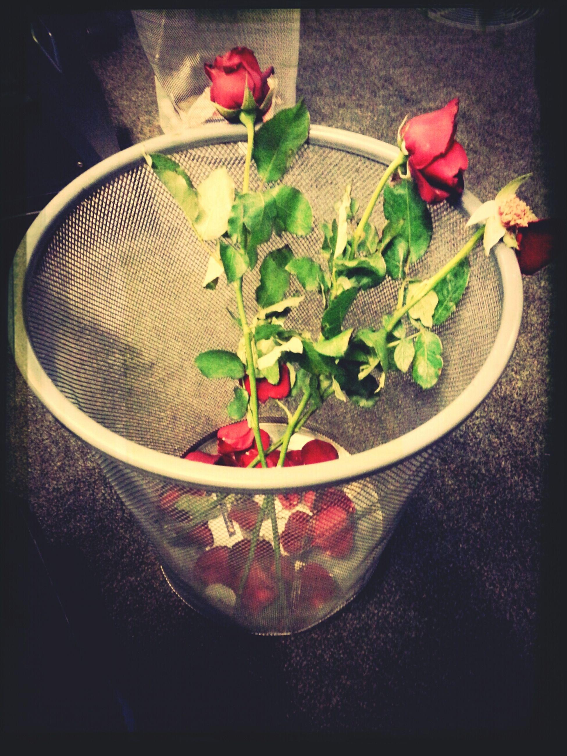 flower, indoors, freshness, vase, fragility, potted plant, plant, petal, rose - flower, table, growth, flower head, leaf, transfer print, flower pot, pink color, decoration, close-up, home interior, nature