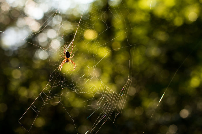 Spider Web Fragility Vulnerability  Focus On Foreground Spider Close-up Arachnid No People Nature Animal Animal Themes Web Day Outdoors One Animal Axvo Spider Sunlight Sun Sunset_collection Sun And Shadow