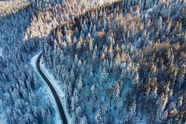 High angle view of pine trees on snow covered land