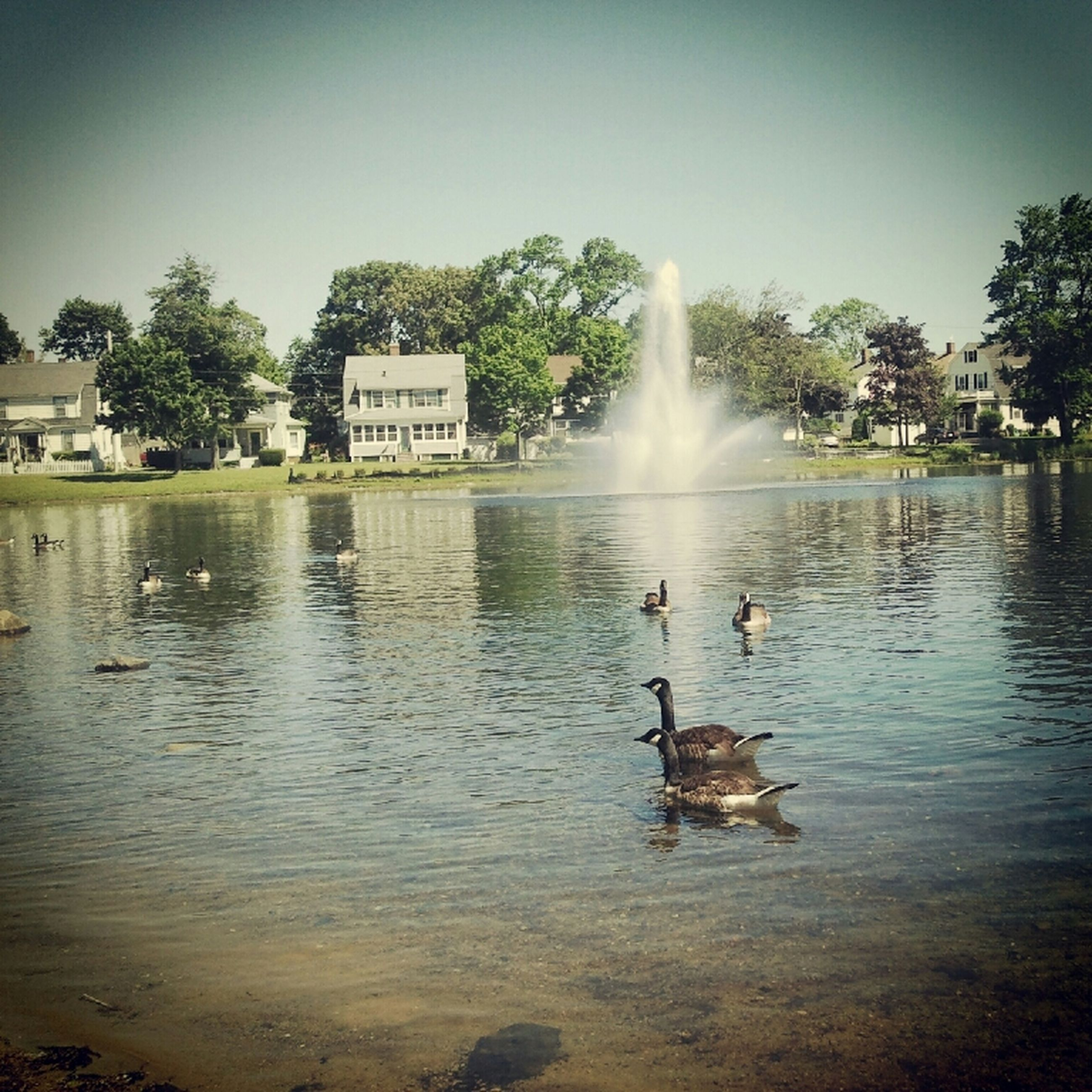 water, tree, bird, clear sky, reflection, animal themes, built structure, waterfront, lake, building exterior, architecture, nature, river, tranquility, wildlife, animals in the wild, tranquil scene, beauty in nature, scenics, swimming