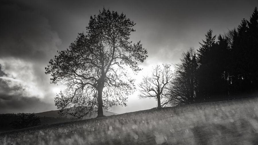 Tree Silhouette Trees Woods Backlit Blackandwhite Pixelated Tree Silhouette Sky Grass Landscape