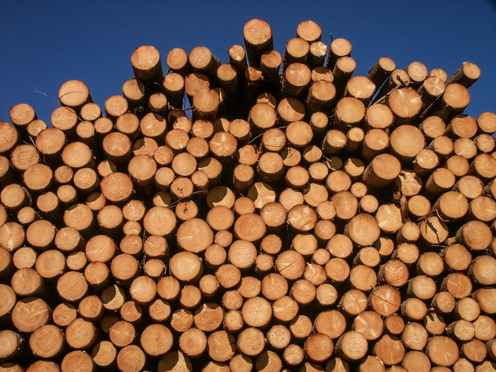 Logging Lumber Pile Pile Of Wood Abundance Clear Sky Environment Environmental Damage Environmental Issues Forest Large Group Of Objects Log Logs Logs Pile Lumber Lumber Industry Nature No People Outdoors Pattern Sky Stack Timber Tree Wood Wood - Material