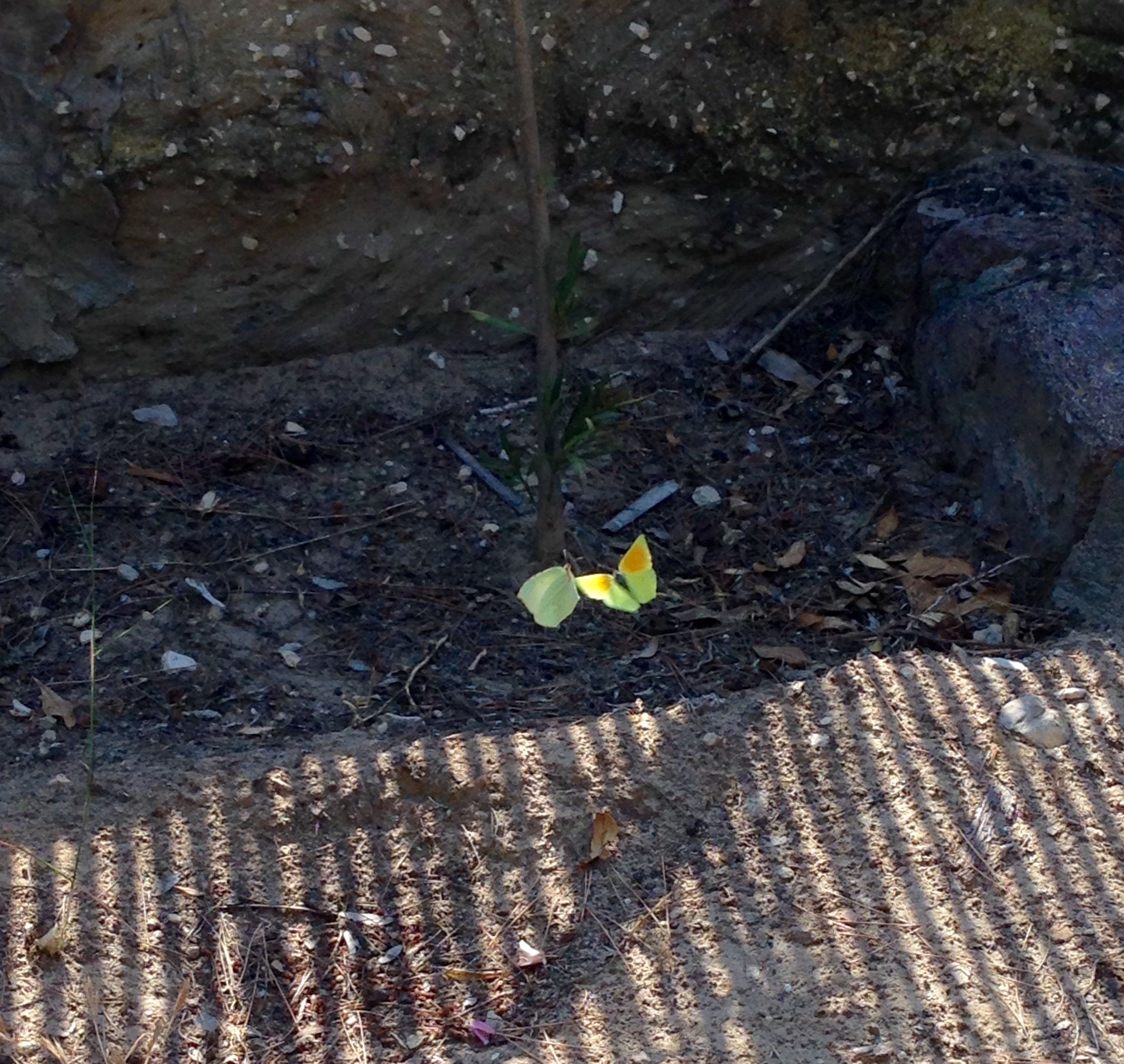 high angle view, nature, yellow, sand, day, tranquility, outdoors, ground, growth, rock - object, no people, close-up, field, sunlight, dry, leaf, beauty in nature, beach, fallen, stone - object