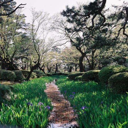 kanazawa japan garden