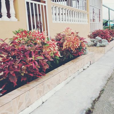 Flower Plant Outdoors Beauty In Nature Architecture Nature Growth Day Fragility
