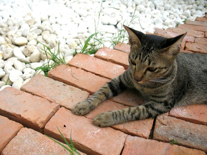 High angle view of tabby sitting on red bricks