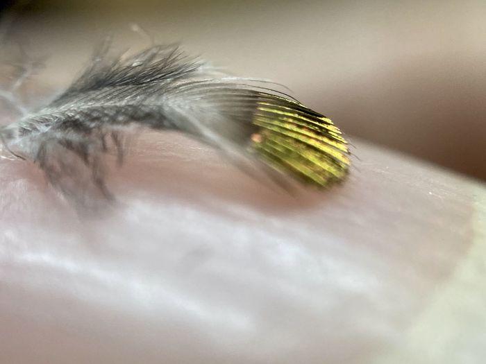 Macro shot of caterpillar