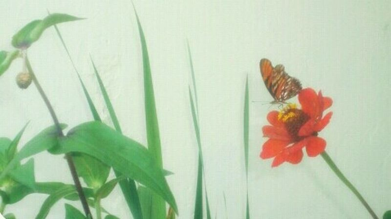 Butterfly Flowers Flowers,Plants & Garden Beautiful Animals  Taking Photos Enjoying Life Nature EyeEm Nature Lover Nature_collection