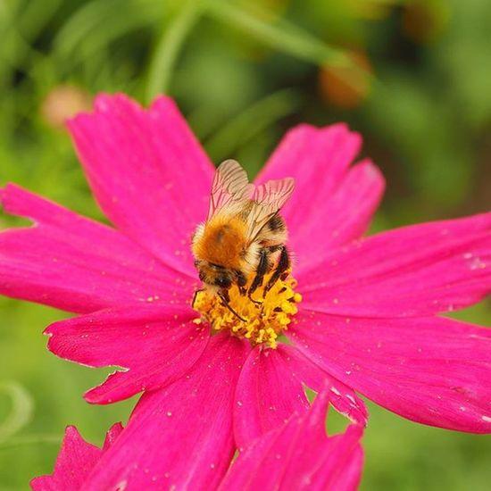Kert Garden Virag Flowers Méhecske Bee Természet Nature Növény Plants