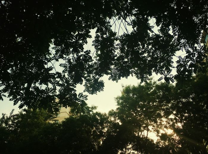 sky Sky Sharn Shear 阴影 天空 天际