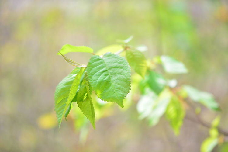 Leaf Plant Part Green Color Growth Plant Beauty In Nature Close-up Nature Focus On Foreground Beginnings No People Selective Focus Leaves Day Fragility Outdoors Vulnerability  Green Freshness Tranquility Bright