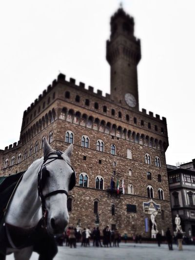 Negative Space Horse EyeEm Animal Lover Historical Monuments EyeEm Best Shots Urban Geometry Beautiful Day Walking Around Helloworld Italianeography