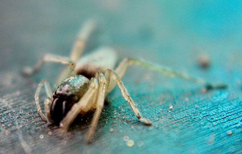 Close-Up Of Spider On Wooden Table