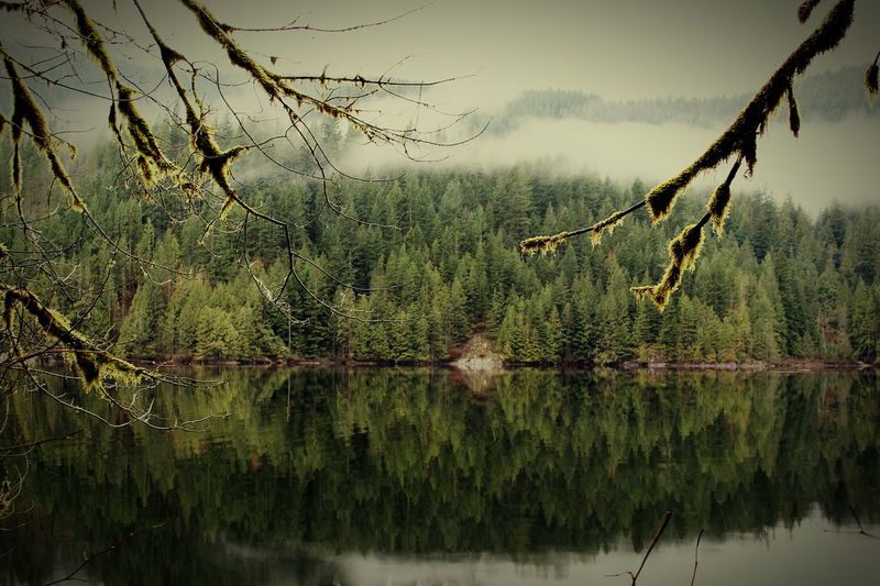 Reflektor Lake View Lakeside Forest Photography Forest Buntzen Lake British Columbia Reflection Reflection In The Water