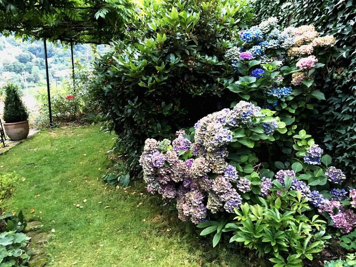 My private garden Flower Nature Growth Day Plant Outdoors Beauty In Nature Green Color No People Flowerbed Freshness Tree Fragility Pergola