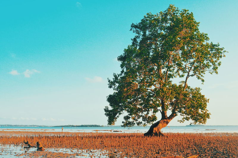 Single Mangrove Tree Beauty In Nature Nature Landscape EyeEmNewHere EyeEm Selects EyeEm Nature Lover Landscape_Collection Blue Blue Sky Tree Seascape Mangrove Mangrove Forest Beach Single Tree Single Mangrove Tree