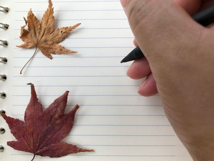 Cropped hand of person with maple leaves writing in diary