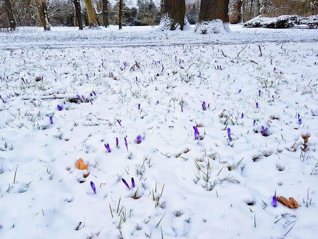 Ich Wünsche allen einen schönen Frühlingsanfang🌞 Abstract Backgrounds Day Cold Temperature Multi Colored People Human Body Part Nature