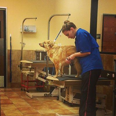 grooming time Petsmart