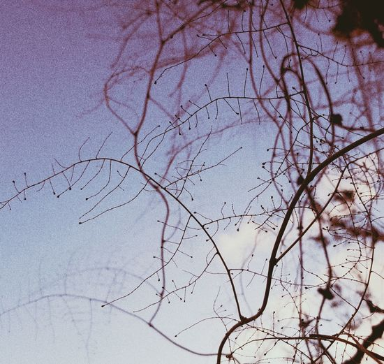 Low angle view of bare trees against sky