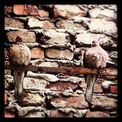 Bird Kumru sweet nature