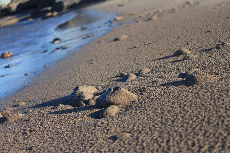 Sand Beach Shore Nature Sunlight No People Outdoors Day Paw Print Animal Track Close-up Beauty In Nature