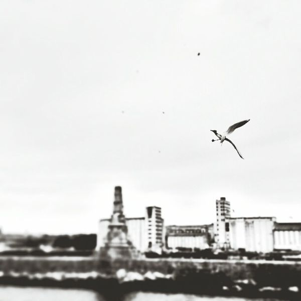 Coulds And Sky Blackandwhitephotography Eyem Best Shots - Black + White Black & White Blackandwhite Black And White Eyembestshots Sea And Sky Seagull Flying Seagull
